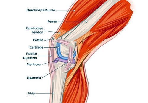 Показания и противопоказания к эндопротезированию коленного сустава биотон прибор для лечения суставов